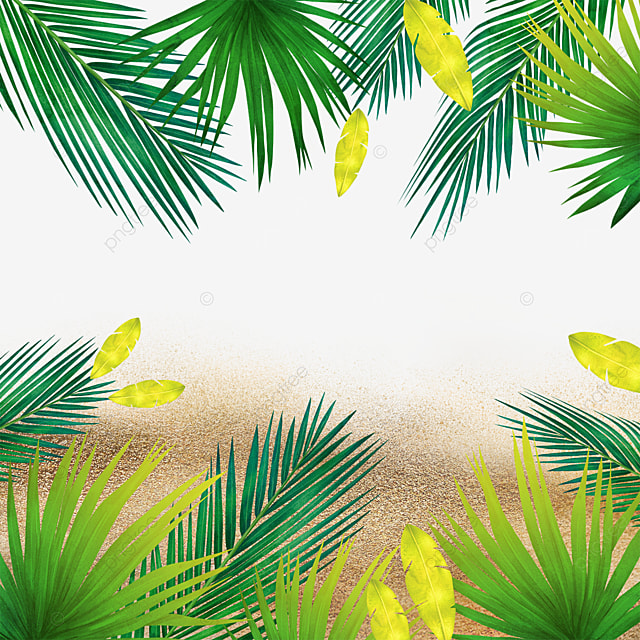 summer summer beach tropical plants green plants