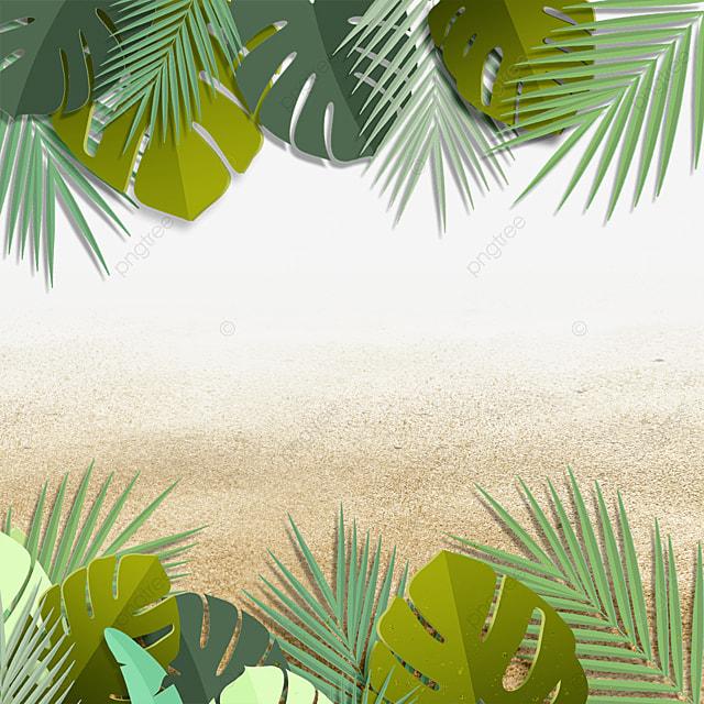 summer summer beach tropical plants