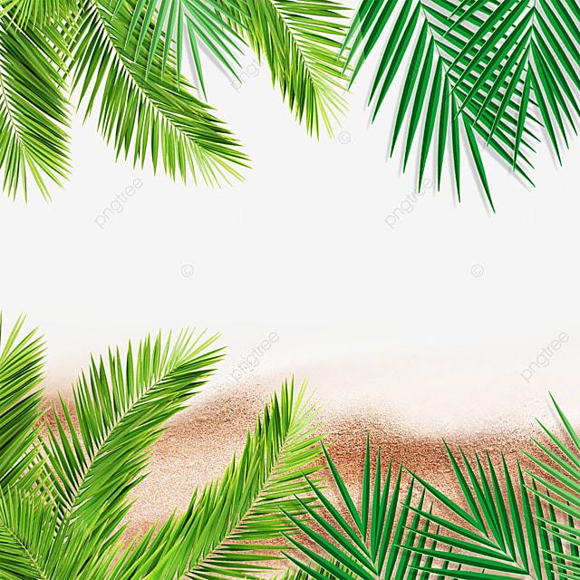 summer summer green leaves tropical plants beach