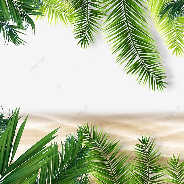 summer tropical background green leafy plant beach