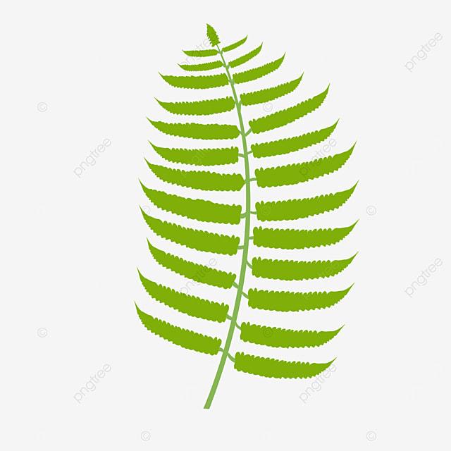 tender green fern clipart