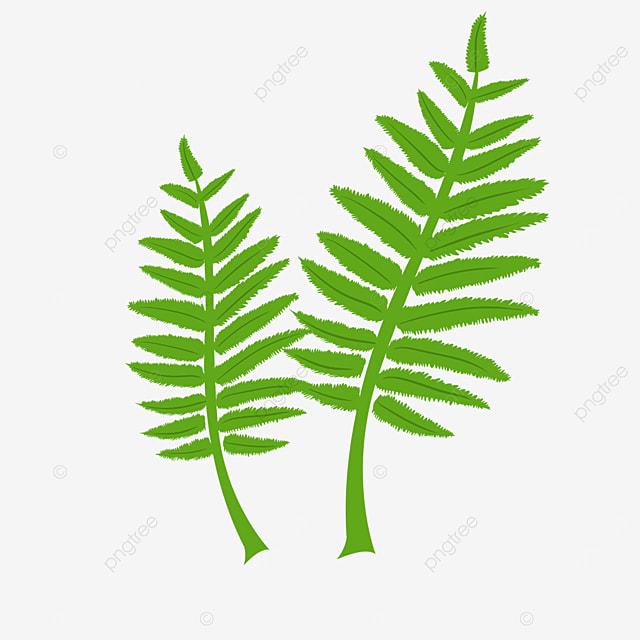 turquoise fern clip art