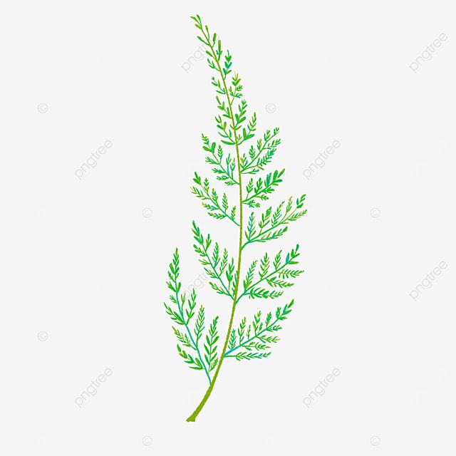 fern clipart green plant leaf illustration
