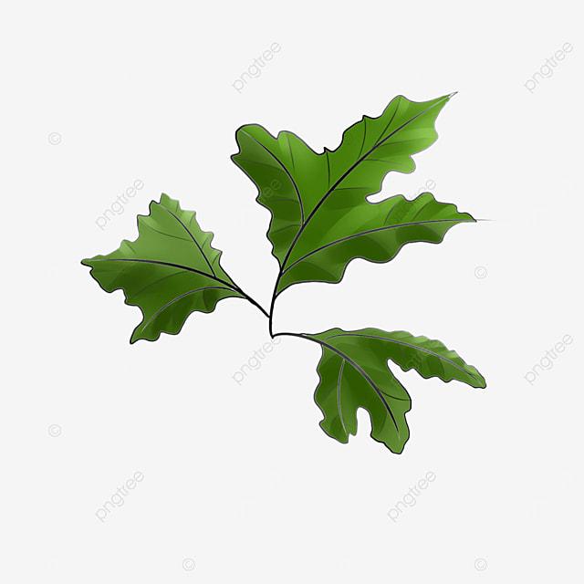 fern leaf clip art