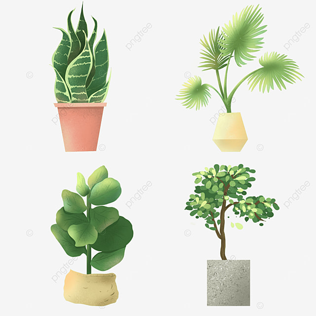 flat wind indoor green potted plants