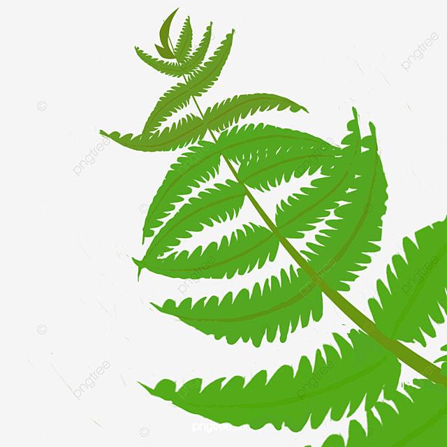 green cartoon fern clipart