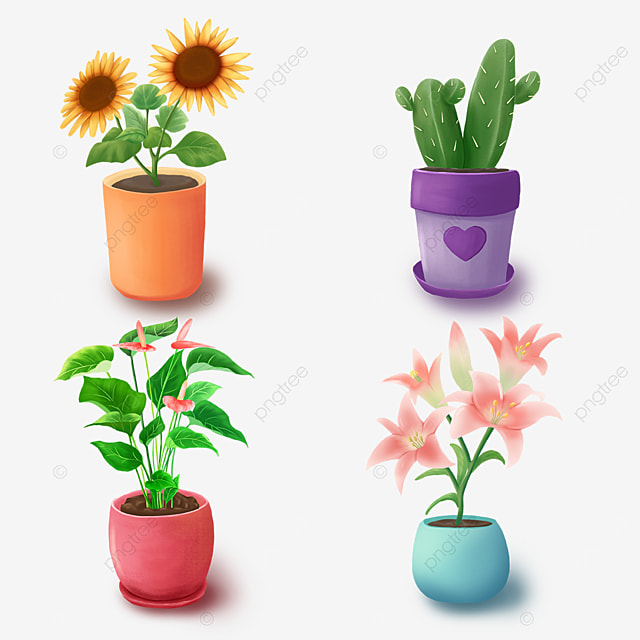 indoor green flower potted green plants small plants