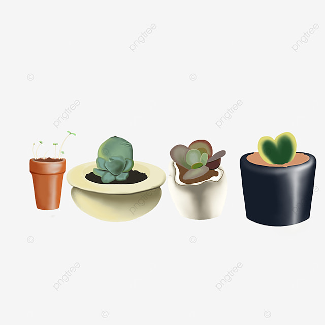 indoor green plants potted decoration at home