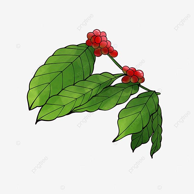 plant vintage coffee leaves
