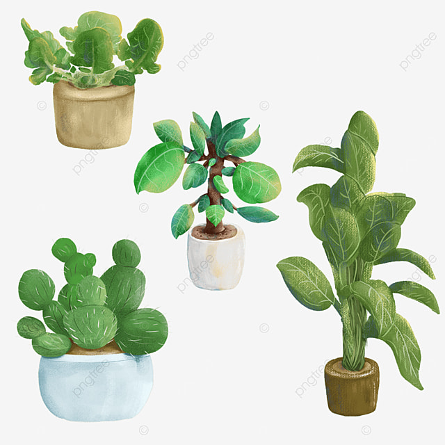 textured houseplant potted plants