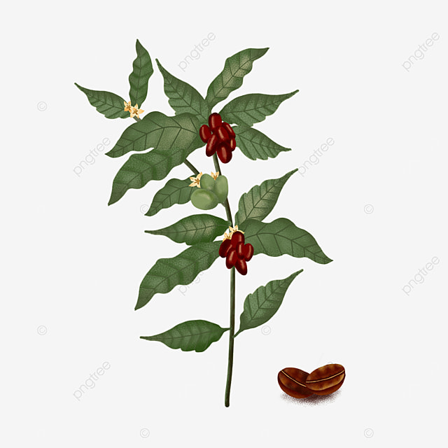 vintage plant coffee leaves