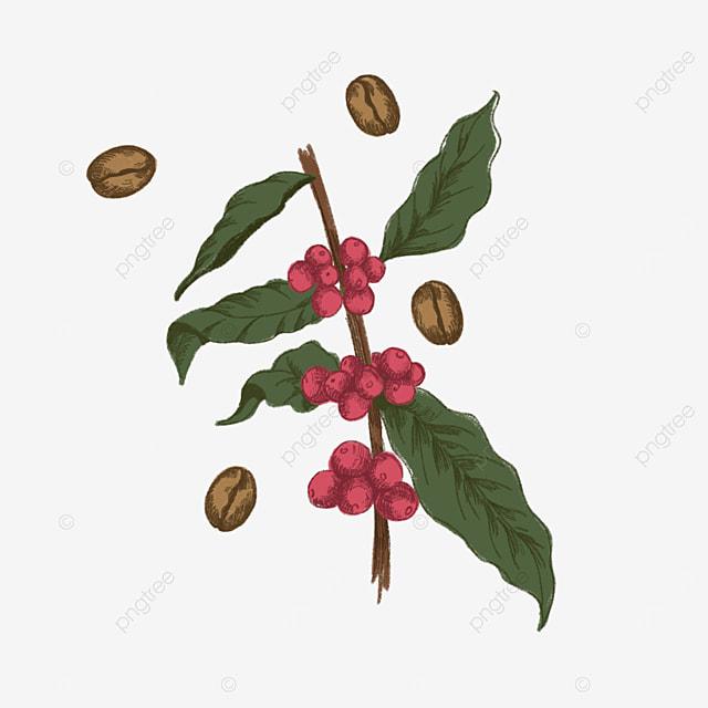 coffee tree clip art