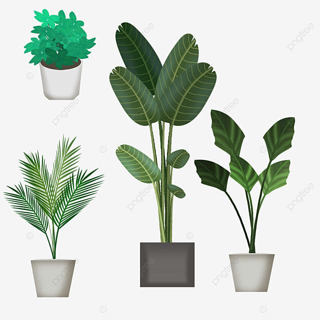 green houseplant in pot
