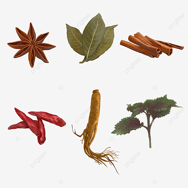 realistic cooking spices and herbs