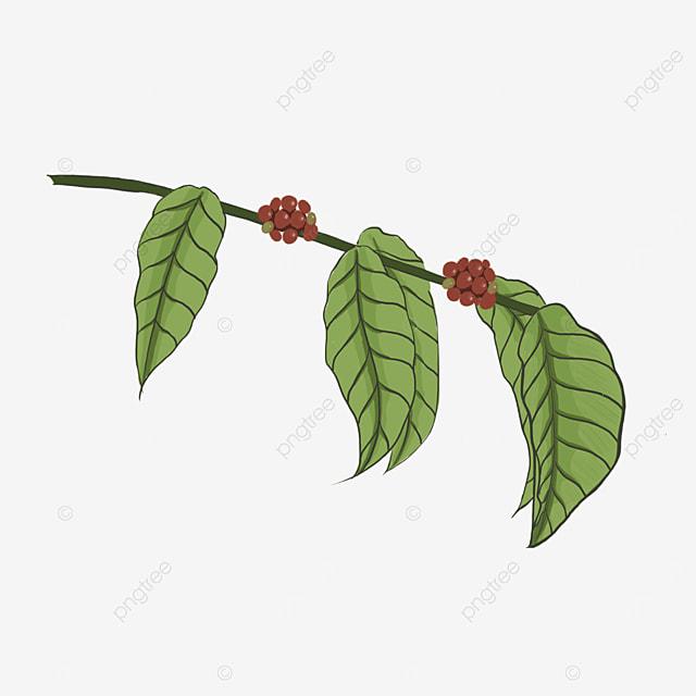 vintage coffee leaf coffee bean