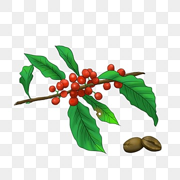 Coffee Tree Png Images Vector And Psd Files Free Download On Pngtree