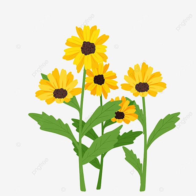 ethiopian new year garden ornamental plant