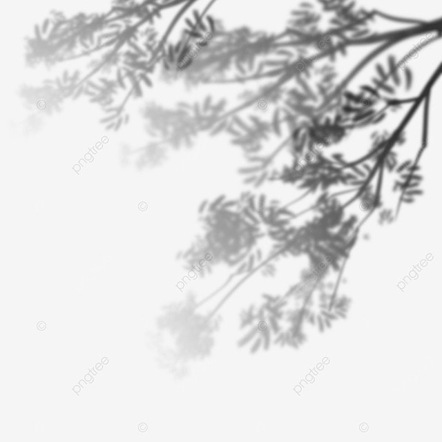 plant leaves black and white shadow