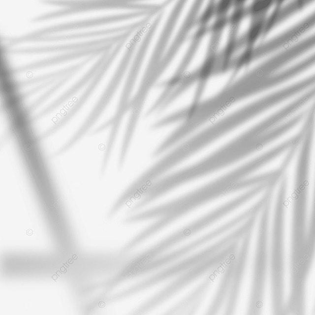 sun shining on palm leaf shadow