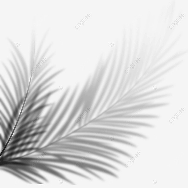 tropical leaves black and white shadow