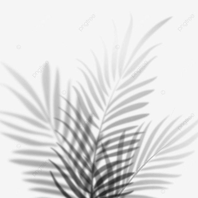 tropical plant leaf shadow
