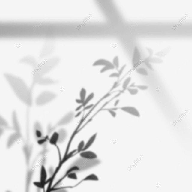 window decoration plant shadow