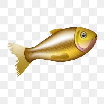 красивый золотой рыбки вектор, животное, аквариум, водные PNG ресурс рисунок и векторное изображение