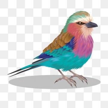 Cartone animato uccello immagini png vettori e file psd