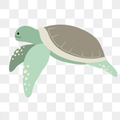 6d8308878 lovely animal baby turtle marine life, Amphibian, Pet Sea Turtle, Marine  Life PNG