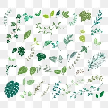 Leaf PNG Images   Vector and PSD Files   Free Download on