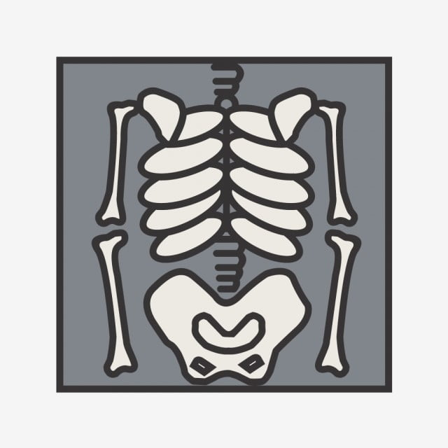 Skeleton Line Filled Icon Line Icons Skeleton Bones Png And Vector With Transparent Background For Free Download