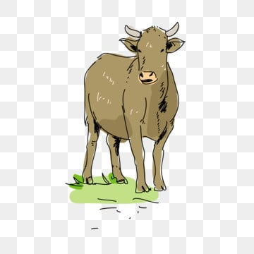 Cattle Png Images Vector And Psd Files Free Download On