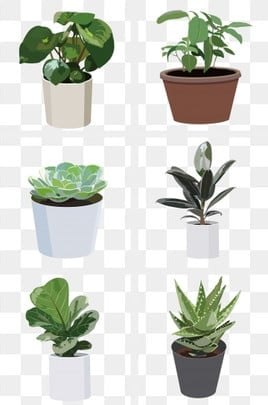 Potted Plant PNG Images | Vector and PSD Files | Free