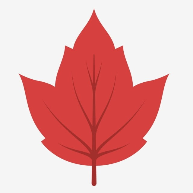 Natural Fresh Cartoon Red Maple Leaf Clipart Maple Leaf Autumn Png And Vector With Transparent Background For Free Download Alibaba.com offers 371 xmas tree cartoon products. natural fresh cartoon red maple leaf