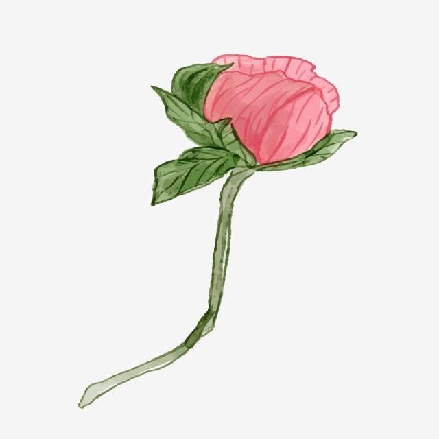 Plante Fleur Dessiné à La Main Cg Dessin Animé Tableau De