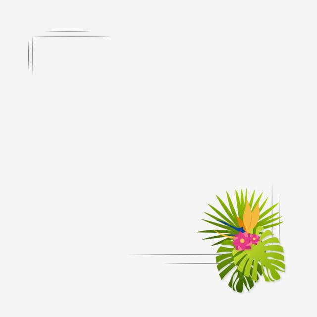 plante tropicale png  vecteurs  psd et ic u00f4nes pour