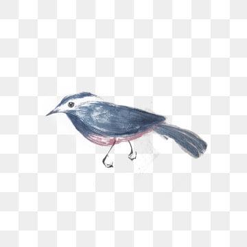 Uccello Grigio Immagini Png Vettori E File Psd Scarica Gratis Su