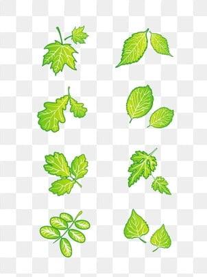 Dessin De Feuilles Vertes Png Images Vecteurs Et Fichiers Psd