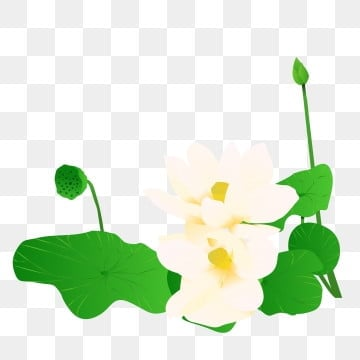 White Lotus Png Vector Psd And Clipart With Transparent