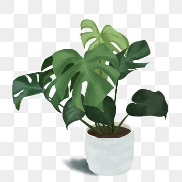 Plant Png Vector Psd And Clipart With Transparent Background