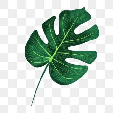 Tree Leaves Clip Art