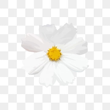 Small White Flowers Png Images Vector And Psd Files Free