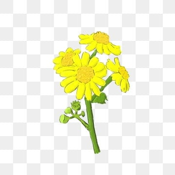 Cartoon Flowers PSD, 1,904 Photoshop Graphic Resources for