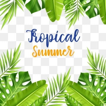 Tropical Summer forest green leaves and palm tree frame, Palm, Tree, Frame PNG and Vector