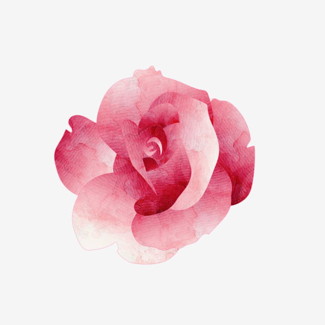 Pink Hand Painted Flower Rose Flower Plant Watercolor Png And