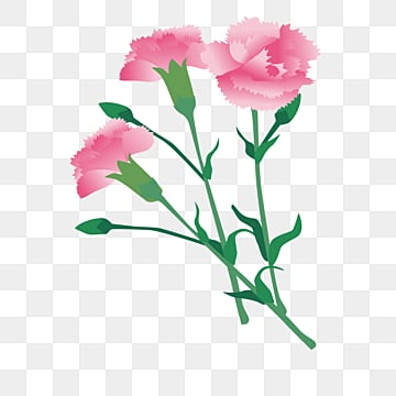 pink carnation flower micromimetic, Carnation, Mothers Day, Pink PNG and Vector