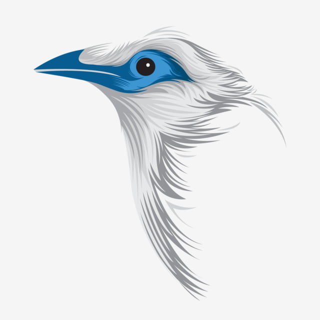 Bird Vector, Animal, Animal Vector, Bird PNG and Vector with