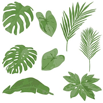 Monstera Png Images Vector And Psd Files Free Download On Pngtree Watercolor tropical leaf of monstera. https pngtree com freepng set of watercolor tropical leaf element illustration 4343171 html