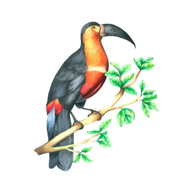 Download 73+ Foto Gambar Burung Enggang Kartun HD  Gratis