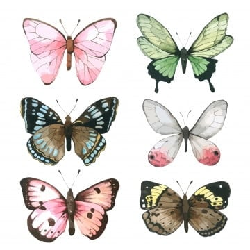 Design Of Beautiful Cartoon Butterfly Insect, Cartoon, Hand Painted